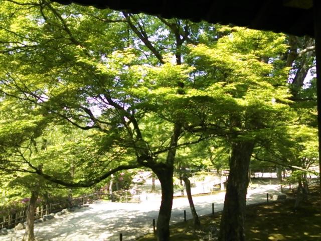 『千人生け花 in 東福寺』ナナイロ京都さん投稿;01