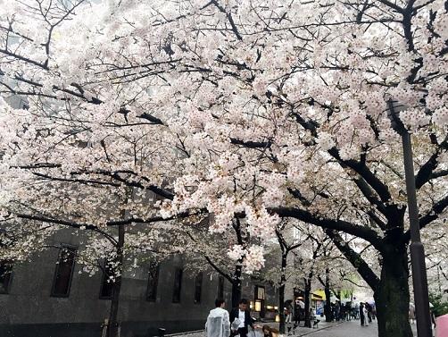 『祇園白川をぶらり』natsumiさん投稿;02
